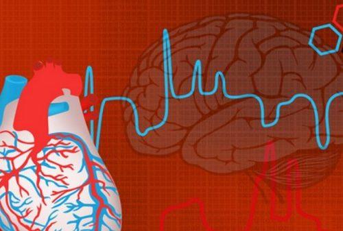 O Mapeamento científico do Coração: Centro da Sabedoria